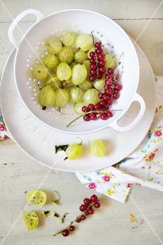 Gooseberries and redcurrants in a colander
