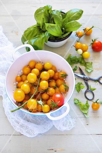Yellow cherry tomatoes and basil