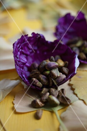 A bowl made from red cabbage leaves, filled with pistachios