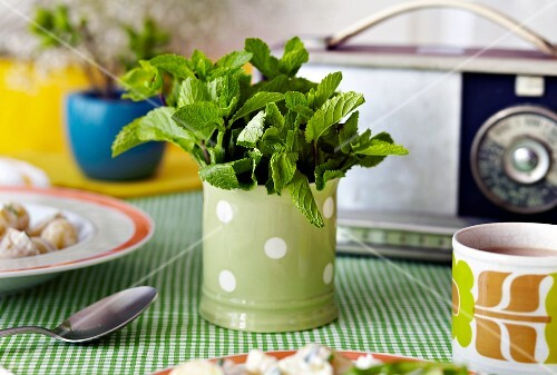 Fresh mint in a mug