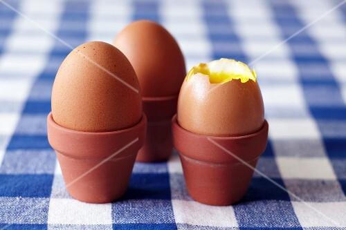 Boiled eggs in small flowerpots