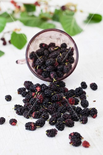 Mulberries Spilling from a Glass
