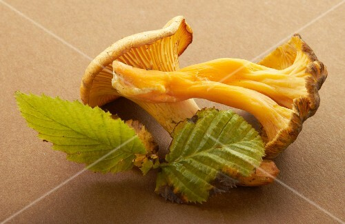 A chanterelle and a mushroom