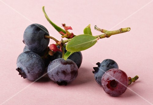 Blueberries on the stalk with a leaf