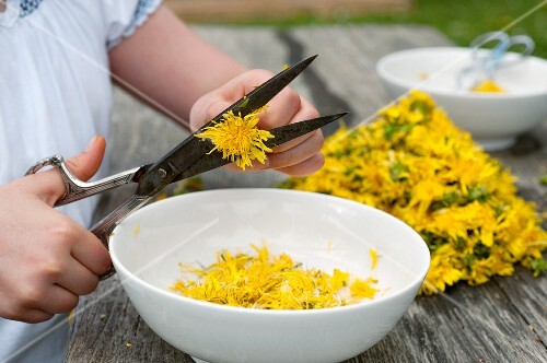 Dandelion flowers being cut off