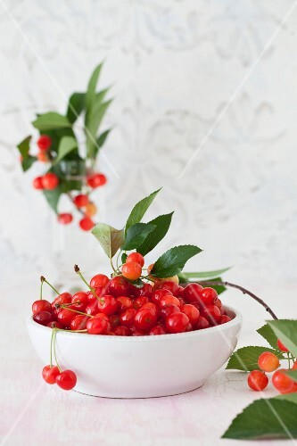 A Bowl of Fresh Picked Sour Cherries