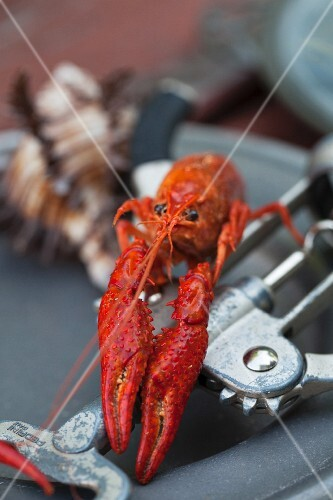 Crawfish on a Corkscrew