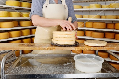 A woman sprinkling cheese with saltwater in a cheese dairy