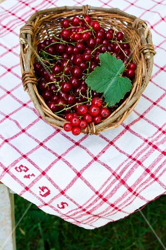 Redcurrants in a basket on a table outdoors