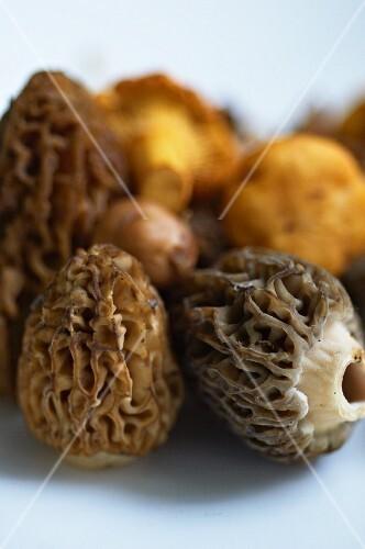 Fresh morels and chanterelles (close-up)