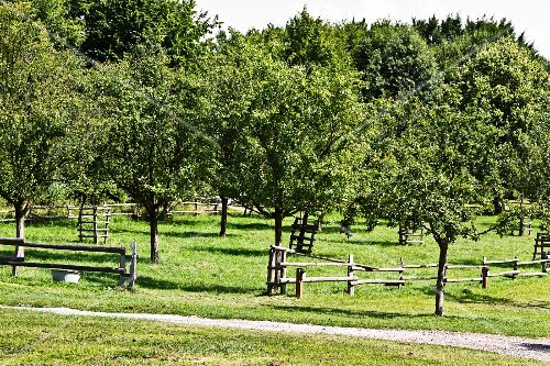 Orchard with fruit trees and wooden fence