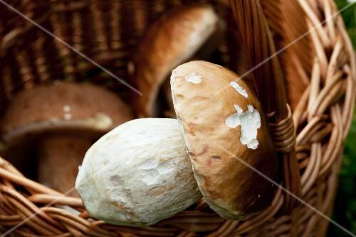 Fresh porcini mushrooms in a basket (close-up)