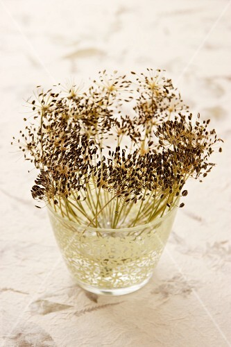 Dill seeds in a glass of water