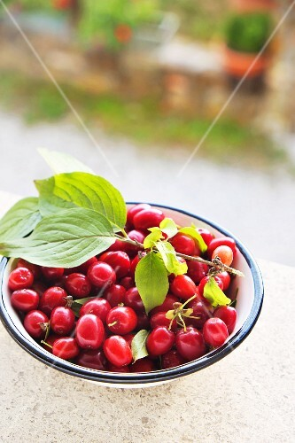 Fresh cornelian cherries in a bowl