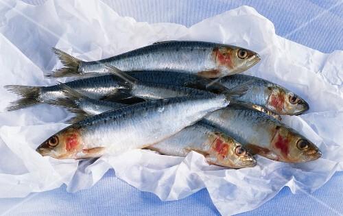 Five fresh sardines on paper