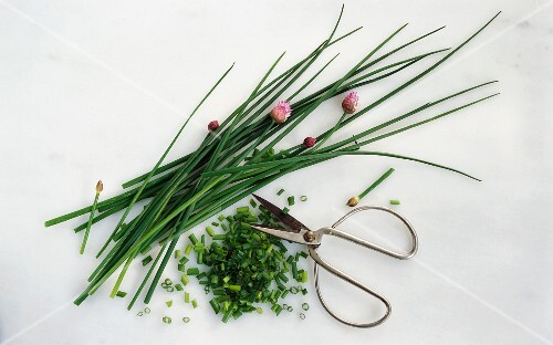 Fresh chives with chopped chives and scissors