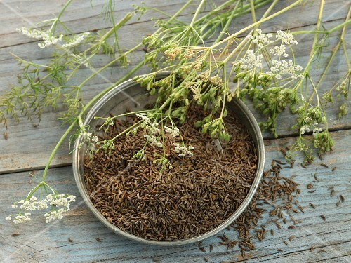 Caraway and caraway plants