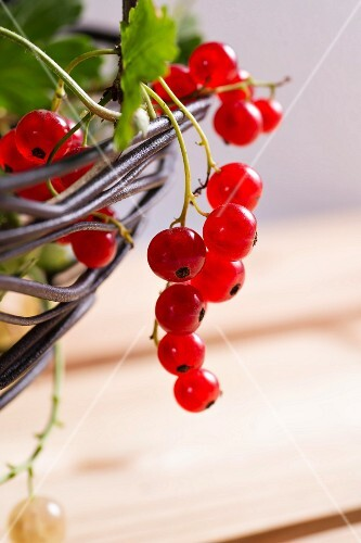 Redcurrants and whitecurrants hanging from a wire bowl