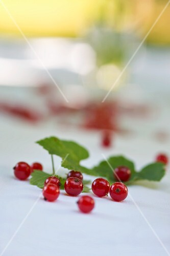Redcurrants on a table in the garden