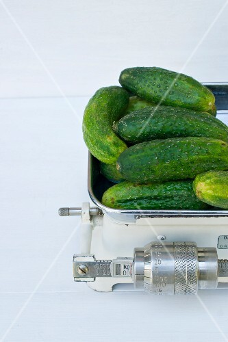 Fresh pickling cucumbers on an old set of kitchen scales