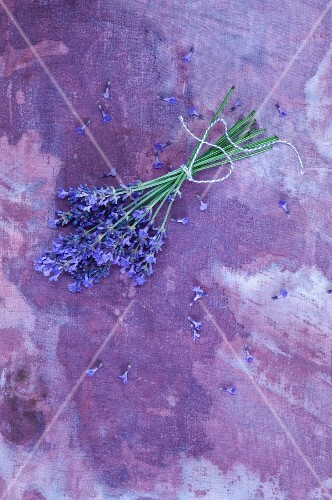 A bunch of lavender on a purple surface