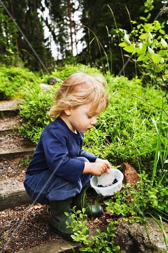 A little boy eating blueberries, Sweden