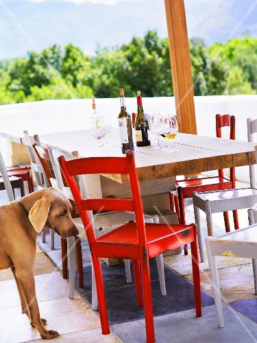 Wine bottles on a table and a dog, South Africa.