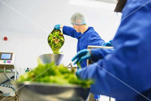 Workers weighing mixed salad leaves