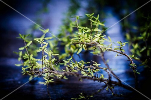 Thyme twigs