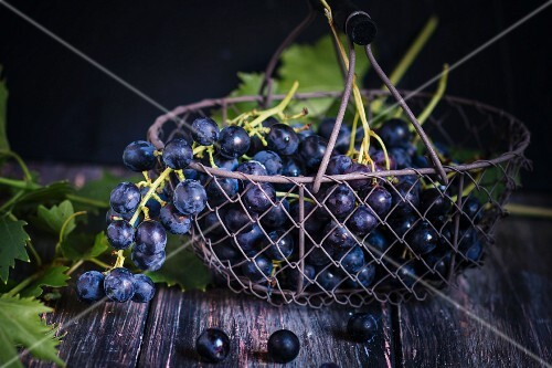 Black grapes in a wire basket with vine leaves