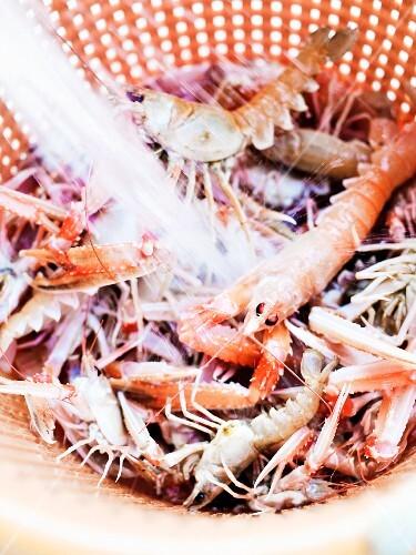 Norway lobsters, Sweden.