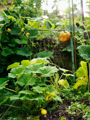 A compost in a garden, Sweden.