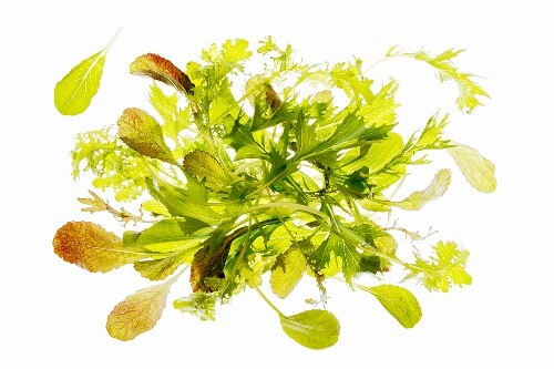 Fresh wild herb salad