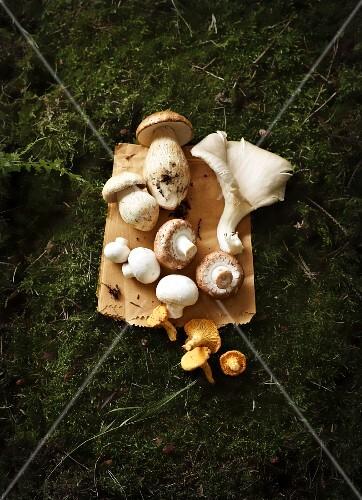 A still life featuring porcini mushrooms, oyster mushrooms, chestnut mushrooms, button mushrooms and chanterelles