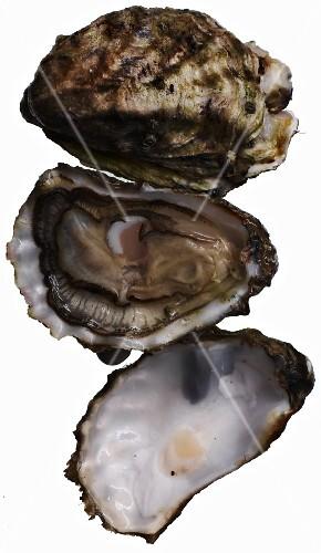 Fresh wild oysters
