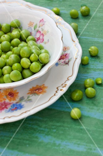 Freshly podded organic peas in old crockery and on the tabletop
