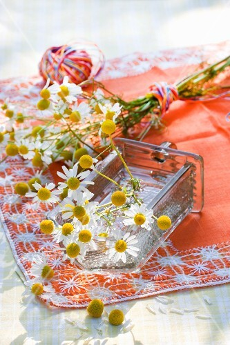 Camomile flowers, individual and tied in a bunch with colourful twine, on an orange tablecloth outside