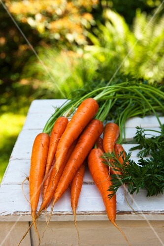 Freshly washed carrots with tops on a wooden table in the garden