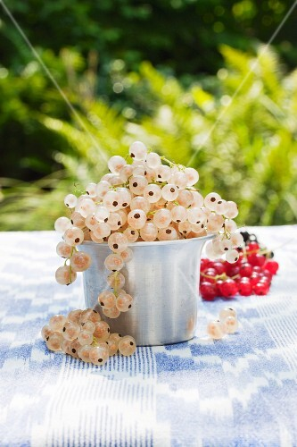 Whitecurrants (red- and blackcurrants in the background) in a small aluminium pot on a table in the garden