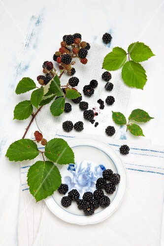 Lots of blackberries with stalks and leaves and on a plate, with an old linen cloth