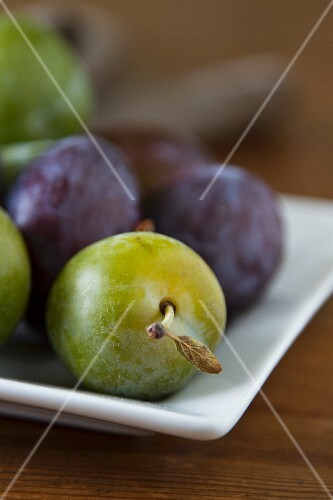 Plums and greengages on a square plate