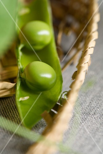 A split pea pod in the rim of a straw hat