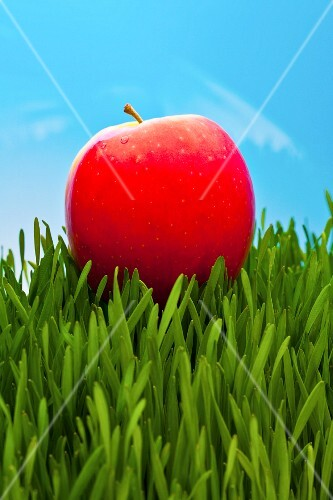Pink Lady apple on wheatgrass
