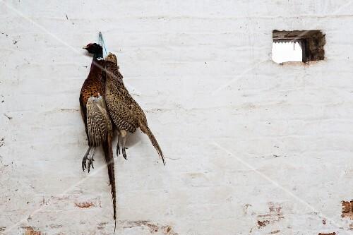 Pheasant and partridge