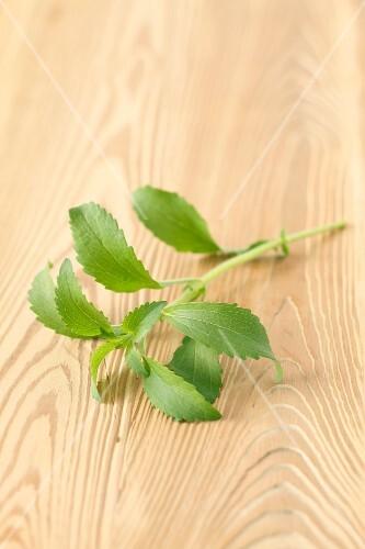 A sprig of stevia