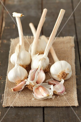Fresh garlic on a piece of jute
