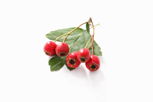 Hawthorn berries and leaf