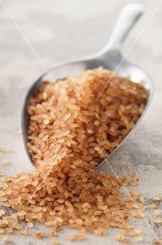 Riz tigré (red rice)