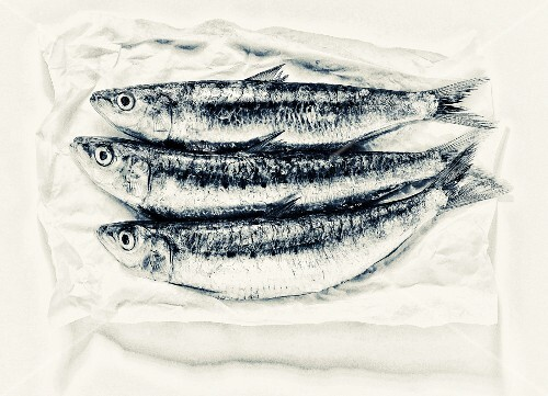 Three sardines on paper (view from above)