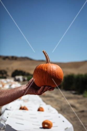 A Man's arm holding a Pumpkin